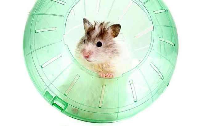 hamster-ball-1 (1)